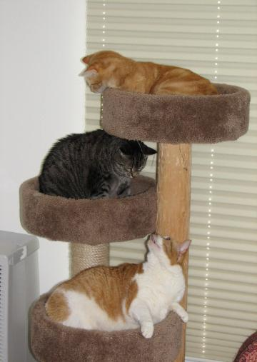 Herbie on top, Gigi and Cracker - my blond playboys and little lady kitties.